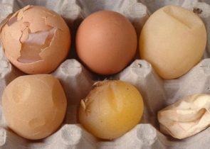 Gà đẻ trứng vỏ lụa, nguyên nhân và cách khắc phục.